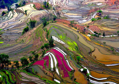29 Terraced Rice Fields China